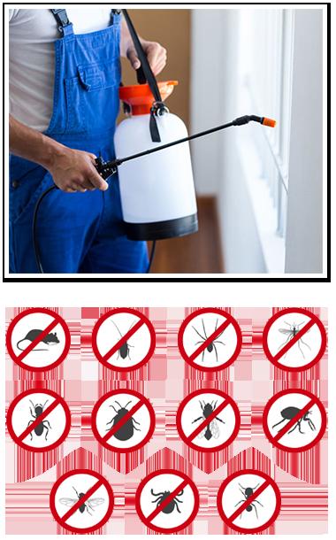 Spraying Bugs